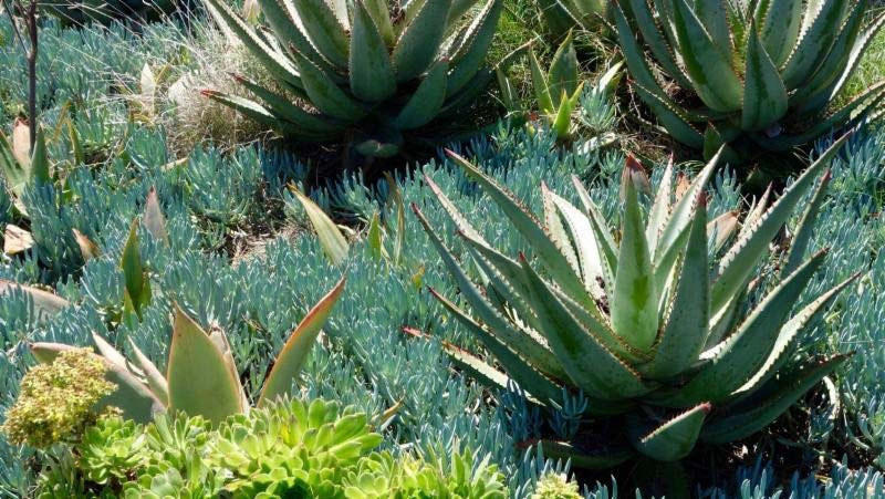 Touring Tongva Park, Santa Monica - Photo 3